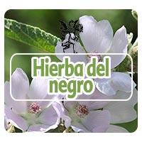 El ángel de tu salud, plantas medicinales para foliculitis, Programa de radio Rodrigo Mondragón