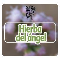 El ángel de tu salud, hierba del angel, programa de rodrigo mondragón