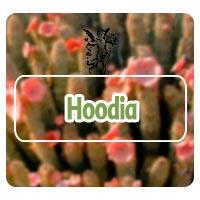 Hoodia, el ángel de tu salud, programa de rodrigo mondragón obesidad. Ansiedad, hambre por ansiedad