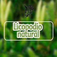 El ángel de te salud, plantas medicinales licopodio, programa de radio con Rodrigo mondragón