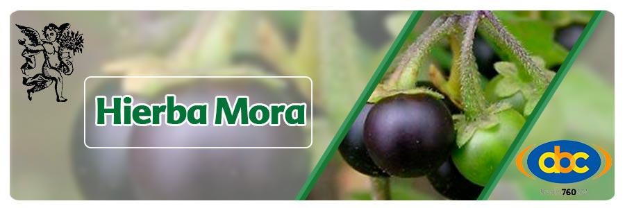 Hierba mora , el Ángel de tu salud, programa de radio el ángel de tu salud, herbolaria, plantas medicinales, Rodrigo Mondragón, propiedades medicinales de la hierba mora