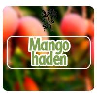 mango haden, nervios en el estómago, plantas medicinales, rodrigo mondragón, Plantas para nervios en el estómago
