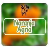 El ángel de tu salud, naranjo agrio, programa de radio Rodrigo Mondragón