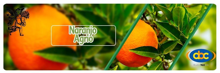 Rodrigo Mondragón, el ángel de tu salud, programa de radio, naranjo agrio para estados de ánimo