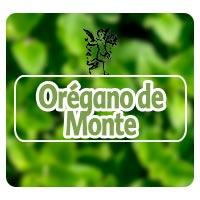 El ángel de tu salud, Rodrigo mondragón, orégano de monte para dolores menstruales, programa de radio
