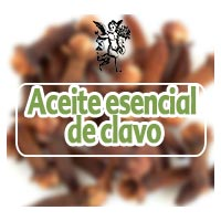 El ángel de tu salud, aceite esencial de clavo, programa de Rodrigo Mondragón