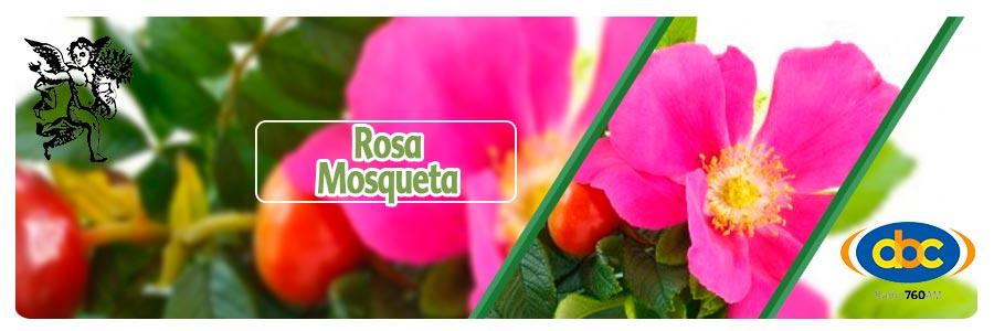 Rosa mosqueta, plantas medicinales, el ángel de tu salud, Rodrigo Mondragón,