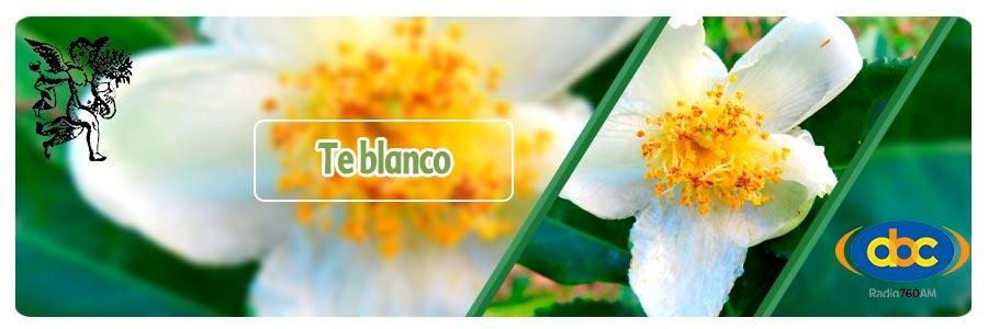 El ángel de tu salud, Plantas medicinales para cristales de colesterol, programa de rodrigo mondragón