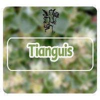 Planta tianguis, Programa de Radio Rodrigo Mondragón, El ángel de tu salud